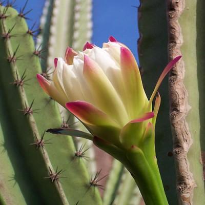 todo-sobre-cactus-y-suculentas