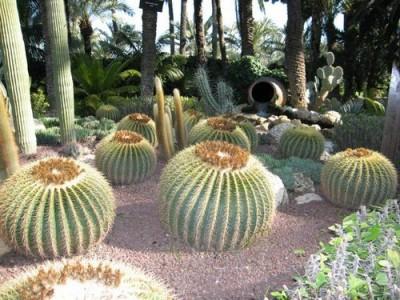 todo-sobre-cactus-y-suculentas-p2-01
