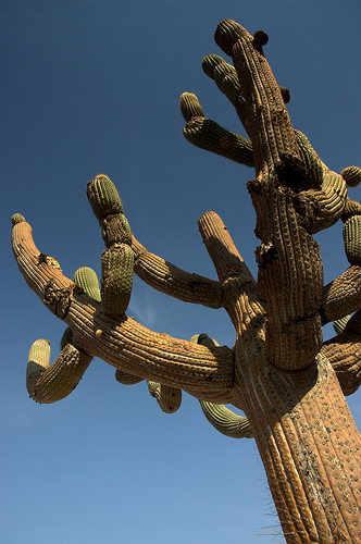 todo-sobre-cactus-y-suculentas-p2-02