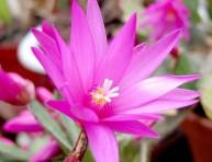 imagen Todo sobre cactus y suculentas – Parte II