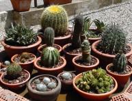 imagen Todo sobre cactus y suculentas – Parte III