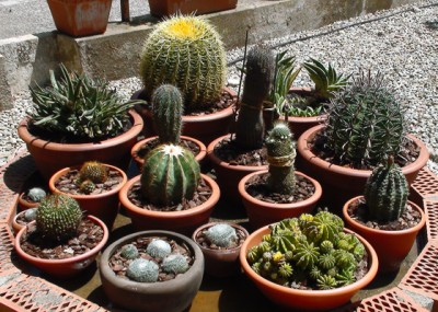 Todo sobre cactus y suculentas parte 3 for Cactus cuidados exterior