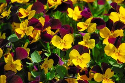 un-invierno-con-colores-p3-02