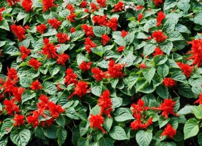 un-jardin-con-aiers-navideños-05