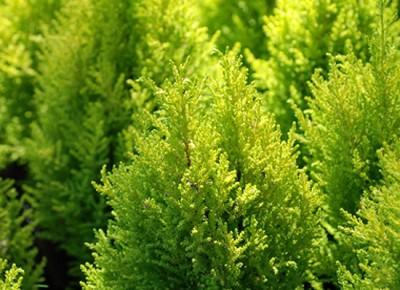 un-jardin-con-aiers-navideños-08