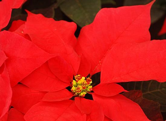 un-jardin-con-aiers-navideños-02