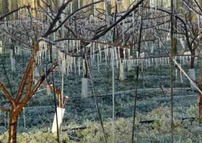 claves-brille-jardi-p3-01