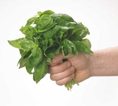 plantas-afrodisiacas-p1-02