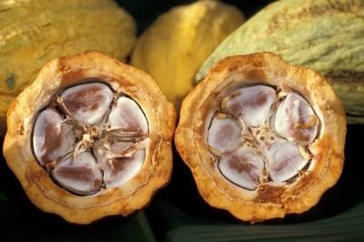 plantas-afrodisiacas-p2-02