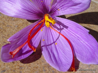 plantas-afrodisiacas-p2-03