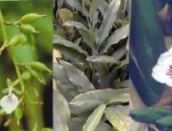 imagen Plantas afrodisíacas y sus estímulos – Parte II