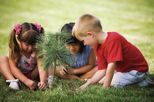 Consejos para el cuidado post plantación de árboles