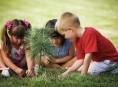 imagen Consejos para el cuidado post plantación de árboles