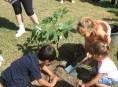 imagen Consejos para plantar árboles