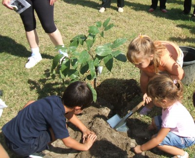 Consejos para plantar rboles plantas for Tipos de arboles para plantar en casa