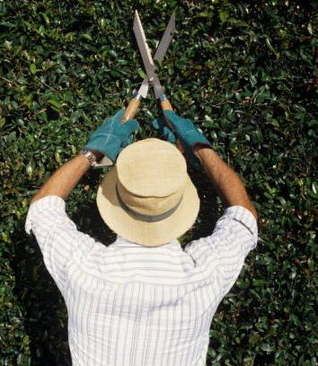 claves-para-que-brille-tu-jardin-parte-v-01