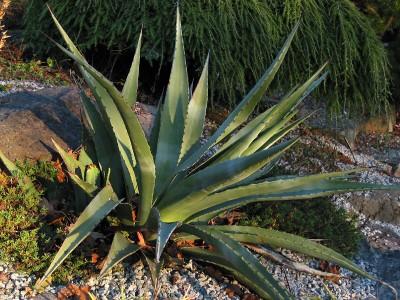 diseñar-jardin-mediterraneo-3-02
