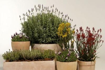 diseñar-jardin-mediterraneo-4-02