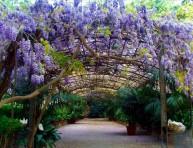imagen Diseñar un jardín mediterráneo – Parte IV