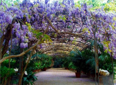 Dise ar un jard n mediterr neo parte iv for Diseno jardin mediterraneo