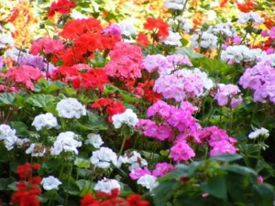 flores-de-primavera-p1-01
