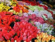 imagen Flores de Primavera – Parte III
