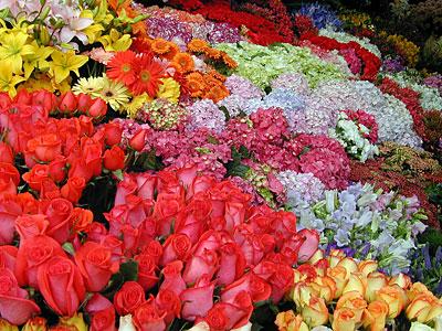 flores-de-primavera-p3-01