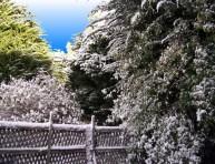 imagen Trabajos de invierno en el jardín – Parte I