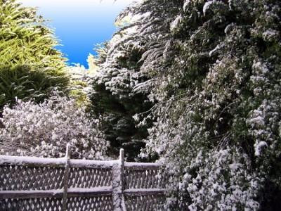 trabajos-de-invierno-en-el-jardin-01