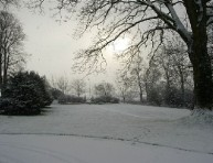 imagen Trabajos de invierno en el jardín – Parte II