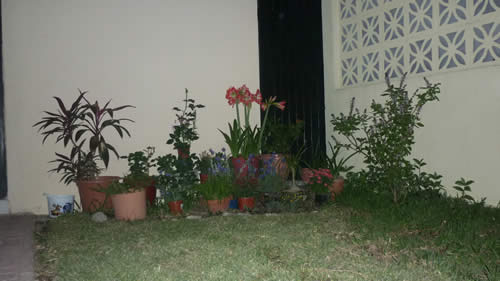 Esthela necesita ayuda con su jardín 1