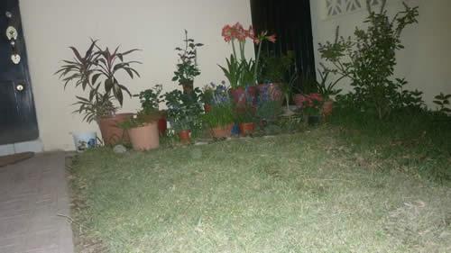 Esthela necesita ayuda con su jardín 2