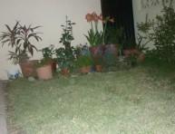 imagen Esthela necesita ayuda con su jardín