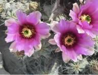 imagen Las fotos de mi desierto casi al natural