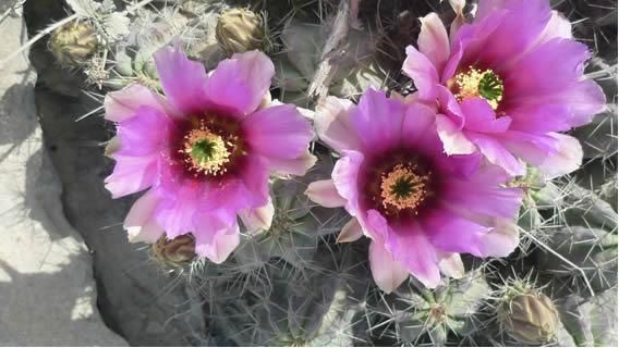 Las fotos de mi desierto casi al natural 4