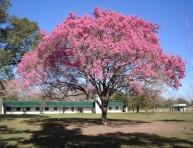 imagen El Lapacho