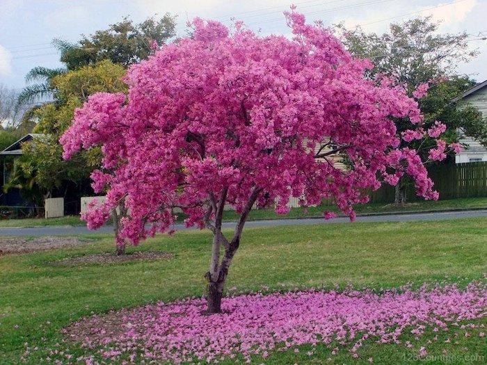 Liquidambar arbol reproduccion asexual de las plantas