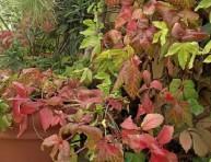 imagen Consejos para el otoño – Primera Parte