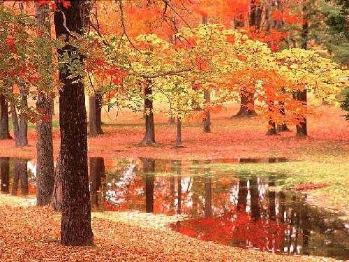 Consejos para el otoño 3