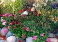 imagen Cuidados post plantación de las herbáceas