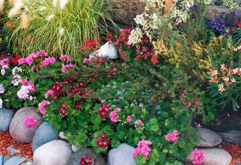 Cuidados post plantación de las herbáceas1