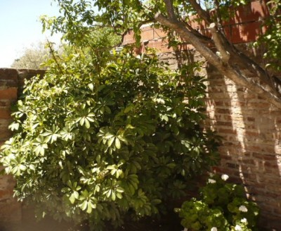 El jardín de Graciela 3