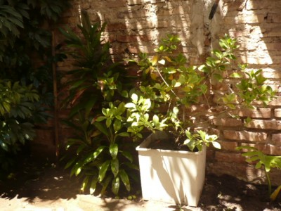 El jardín de Graciela 2