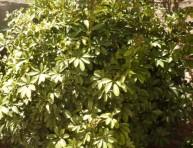 imagen El jardín de Graciela