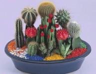 imagen Algunas plantas que soportan la calefaccion de la casa
