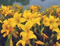 imagen Compra y plantacion de una herbacea perenne