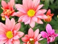 imagen División y multiplicación de las plantas florales perennes