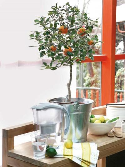 Arbutos el naranjo enano - Primera Parte