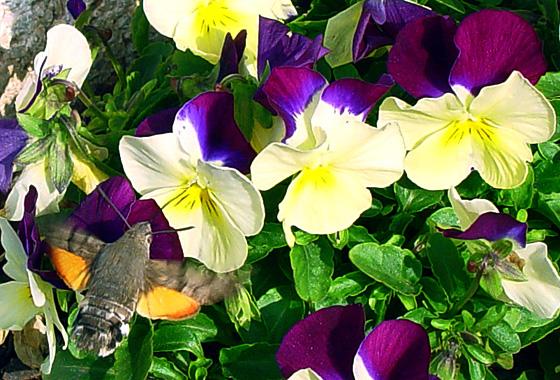 Despertar de primavera1