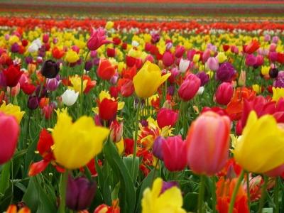 Despertar de primavera2